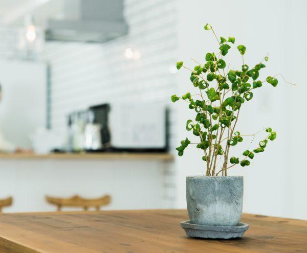 風水的に良い玄関におすすめの観葉植物9