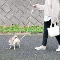 愛犬だけでなく飼い主までウキウキ♪手作業で編んで作られた「リード」