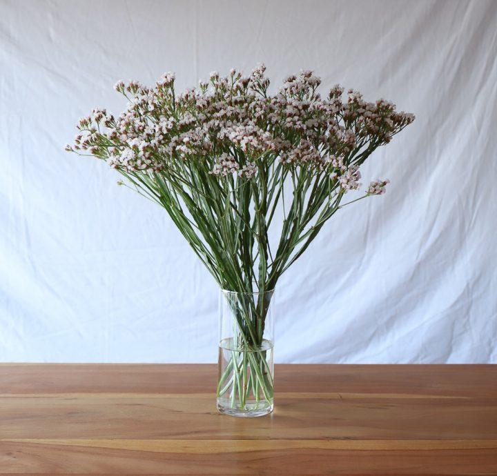 「水の量」は、花の種類によって変える3