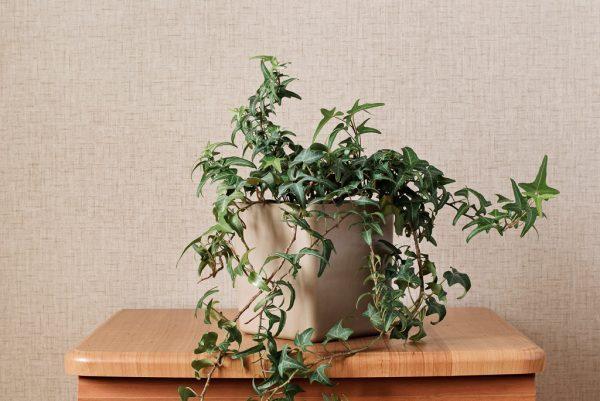 風水的に良い玄関におすすめの観葉植物14