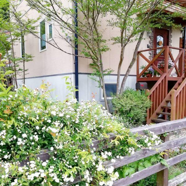 エゴノキと低木を合わせて作る玄関ポーチ
