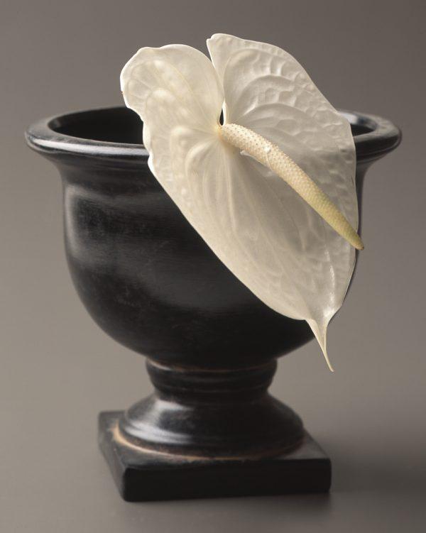 比較的長持ちしておすすめのお花はこちら