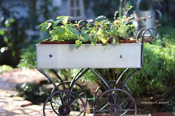 狭い庭 ガーデニング 鉢植え コンテナ3