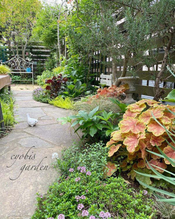 狭い庭 ガーデニング 地植え2