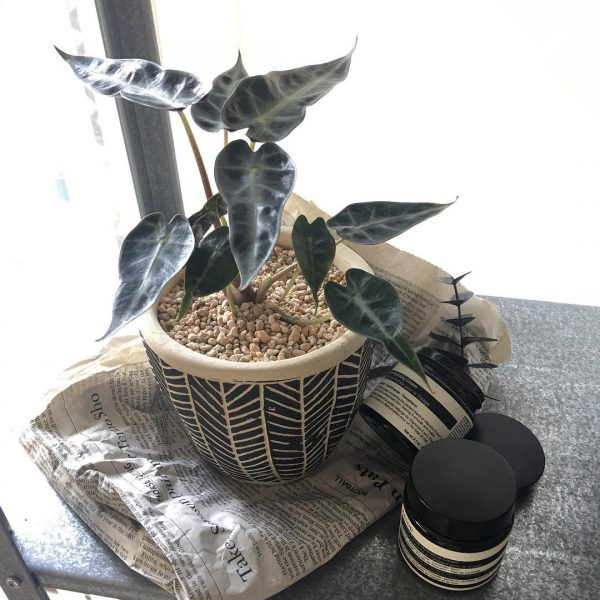 風水的に良い玄関におすすめの観葉植物10