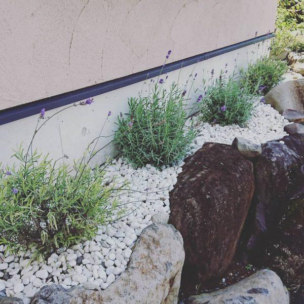 狭い庭 ガーデニング 地植え4