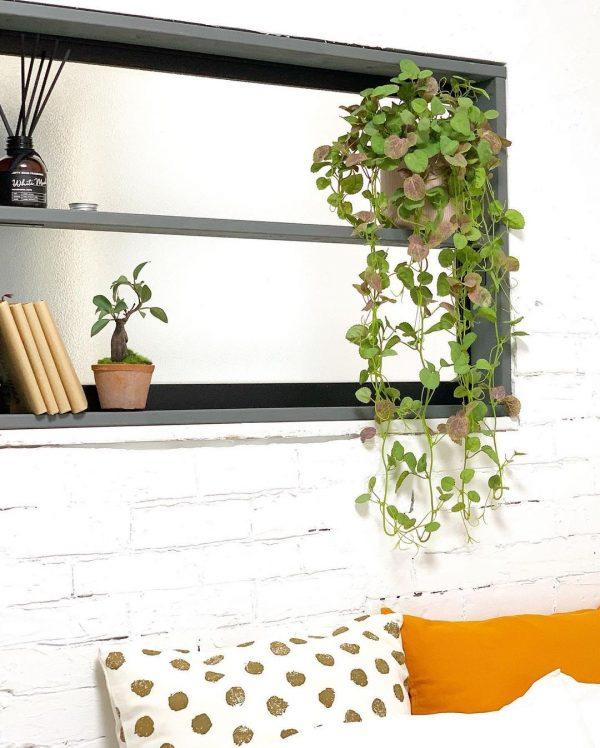 風水的に良い玄関におすすめの観葉植物11