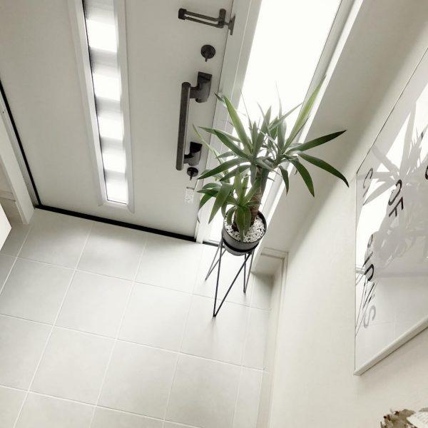 風水的に良い玄関におすすめの観葉植物7