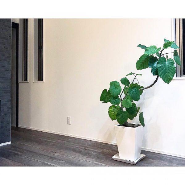 観葉植物はリビングの気を整える