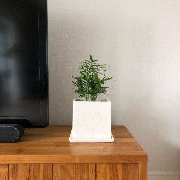 風水的に良い玄関におすすめの観葉植物6