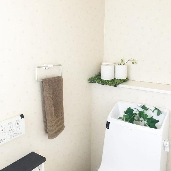 水回りは湿気や寒さに強い観葉植物を置く