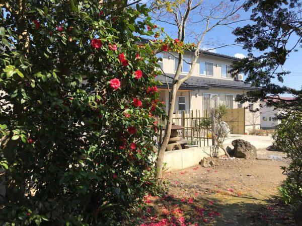 和風庭園の垣根におすすめツバキ