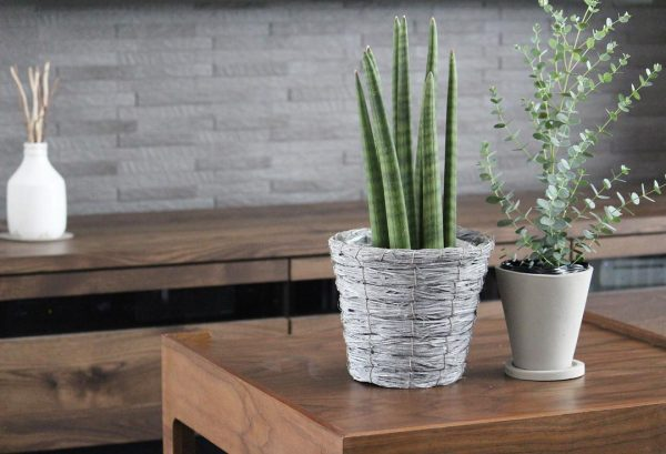 観葉植物は癒し効果と風水効果がある置物