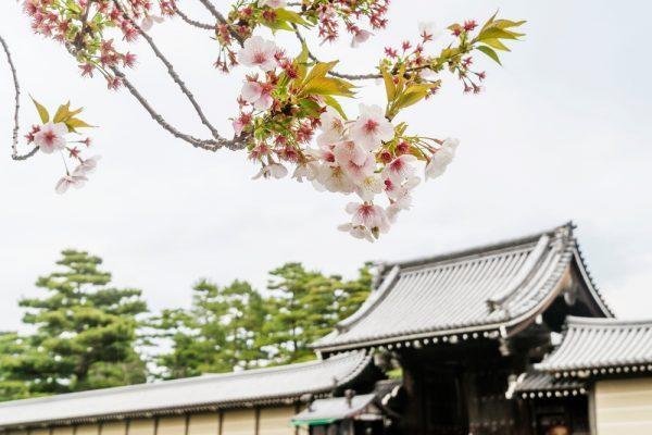 京都御所14