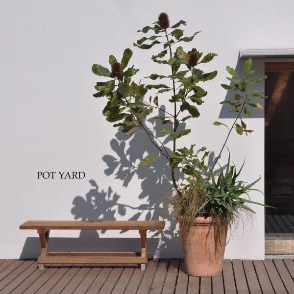 狭い庭 ガーデニング 鉢植え コンテナ4