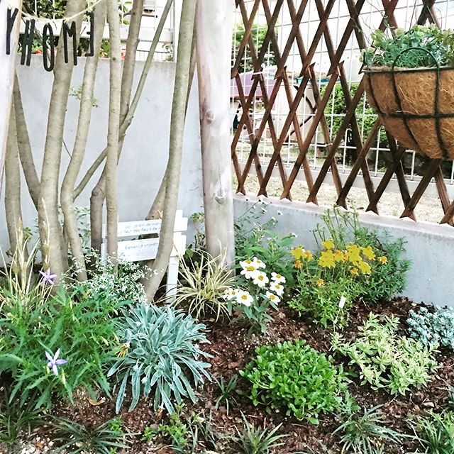 ラティスと庭のデザインを組み合わせた目隠し