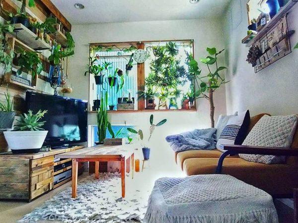 ナチュラルカントリーな部屋の観葉植物の実例