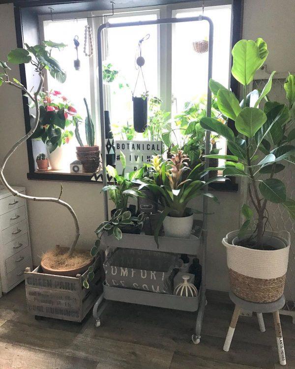 観葉植物が素敵なインテリア5