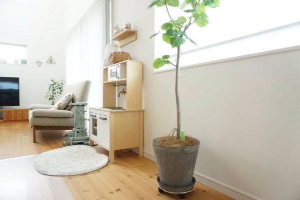 観葉植物が素敵なインテリア8