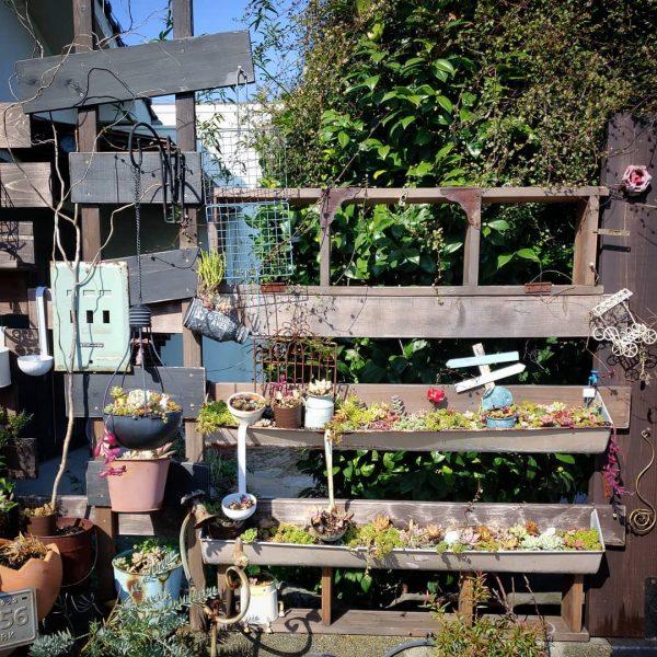 多肉植物を飾るDIYガーデニング用の棚