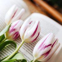 白い花の美しい花言葉一覧!恋愛や感謝を意味する贈り物にも最適な花をご紹介