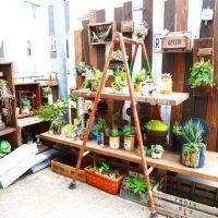 ガーデニング用のおしゃれな棚をDIYしたい!屋外〜室内用まで作り方をご紹介
