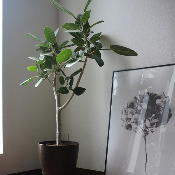 ボタニカルインテリア 観葉植物