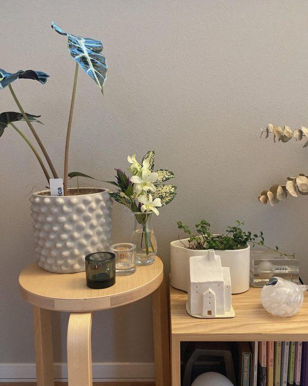 植物を飾る