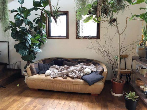 犬と暮らす部屋のレイアウト4