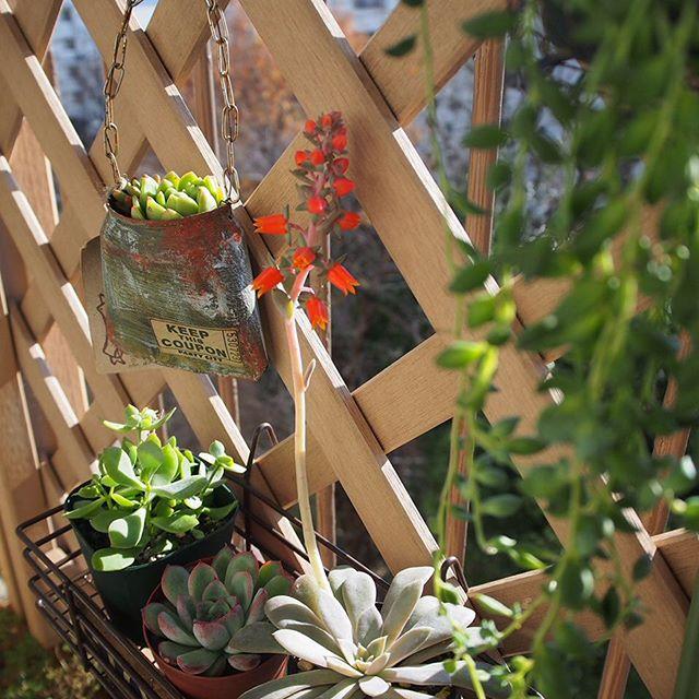 観葉植物16