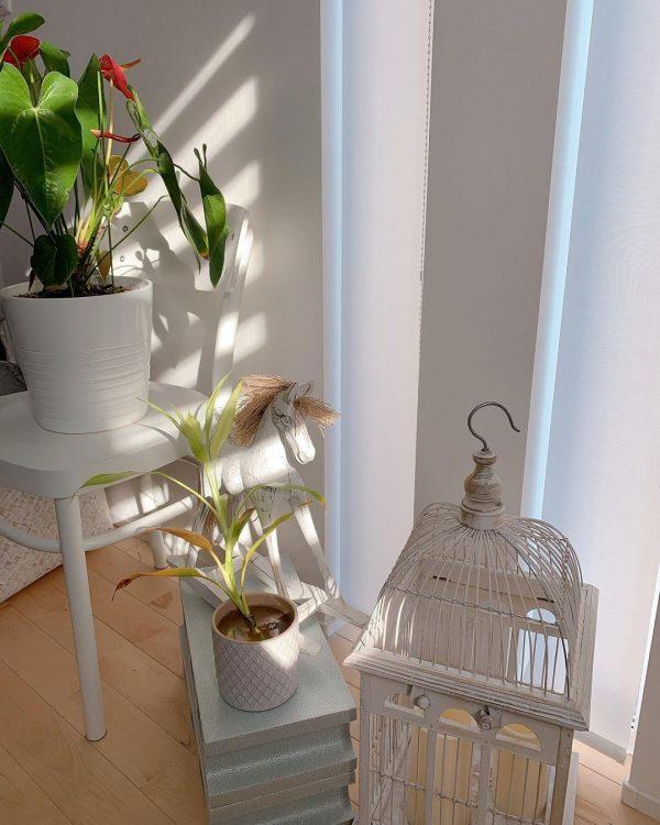 植物を飾るスペースとして
