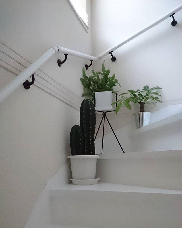 サボテン インテリア 階段 飾り方2