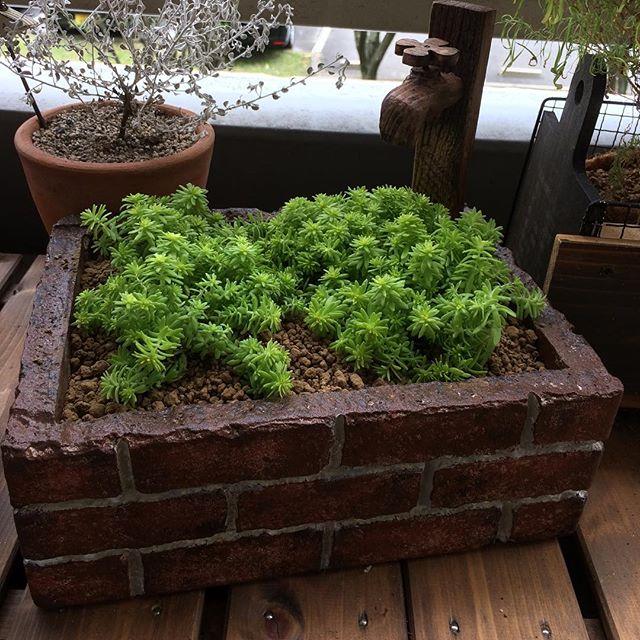観葉植物8