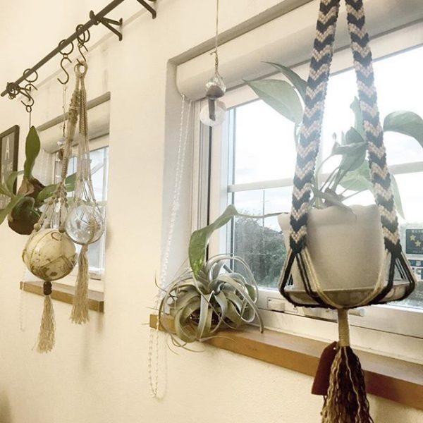 窓側に植物を吊るす風水術