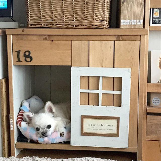 犬と暮らす部屋のレイアウト13