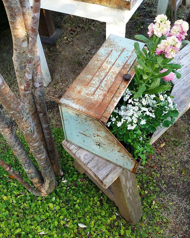 錆びたブレッドボックスで作る北欧風鉢植え