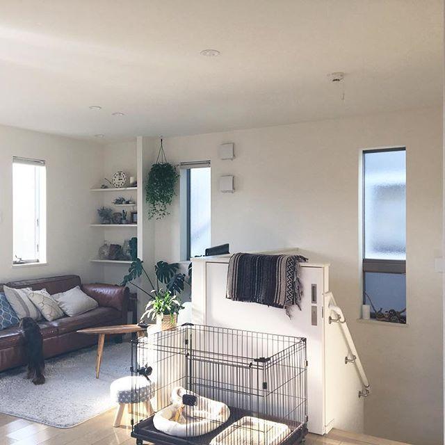 犬と暮らす部屋のレイアウト8