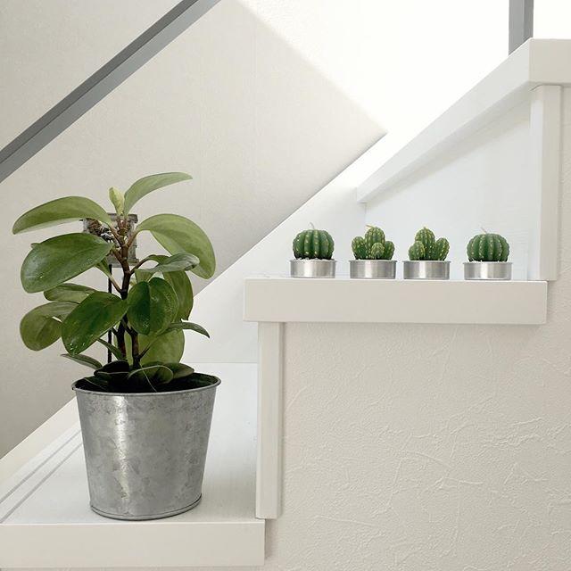 サボテン インテリア 階段 飾り方3