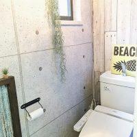 トイレに置くと良い観葉植物16選。風水効果で運気上昇するグリーンインテリア