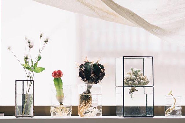 サボテン インテリア 飾り方 鉢