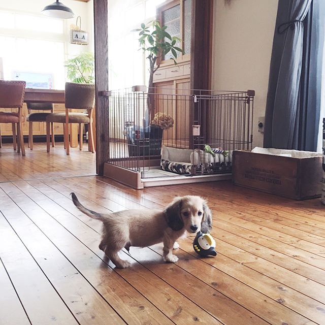 犬と暮らす部屋のレイアウト5