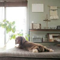 犬も快適なお部屋づくり。家具やレイアウトを工夫して実用的でおしゃれな空間に