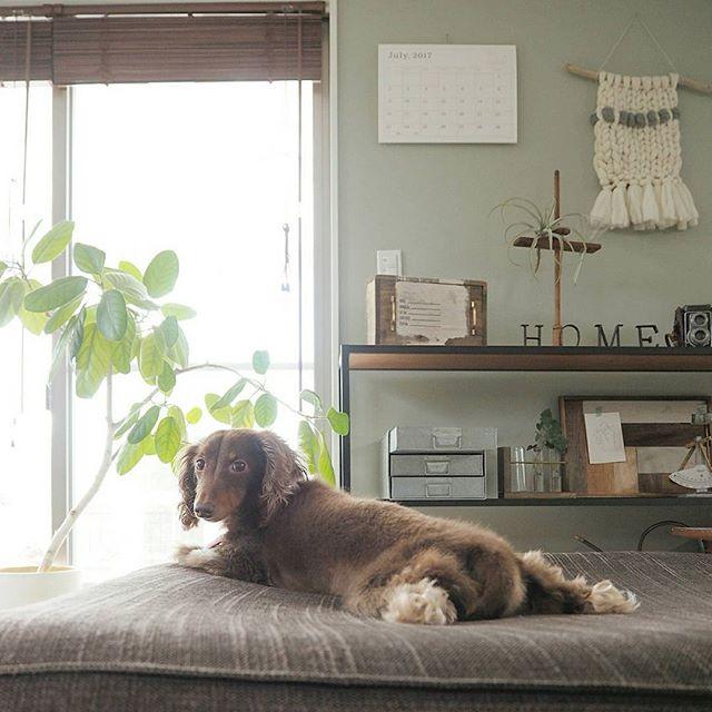 犬と暮らす部屋のレイアウト2