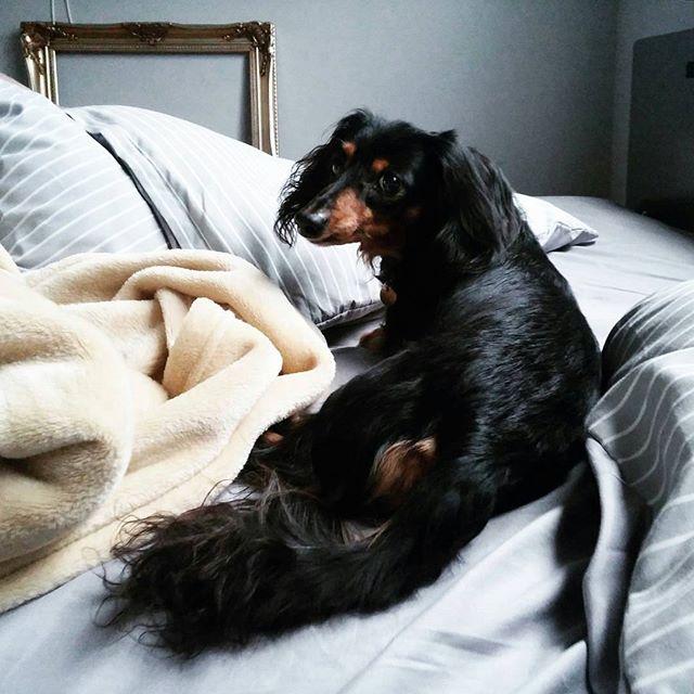 犬と暮らす部屋のレイアウト12
