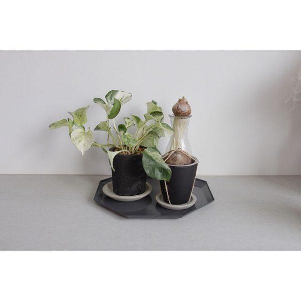 シンプルに植物だけを置く運気UP術