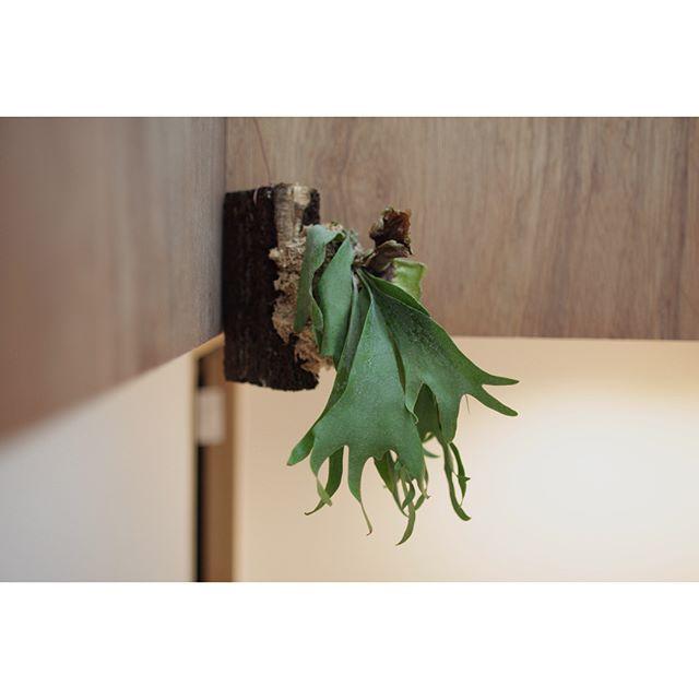 観葉植物15