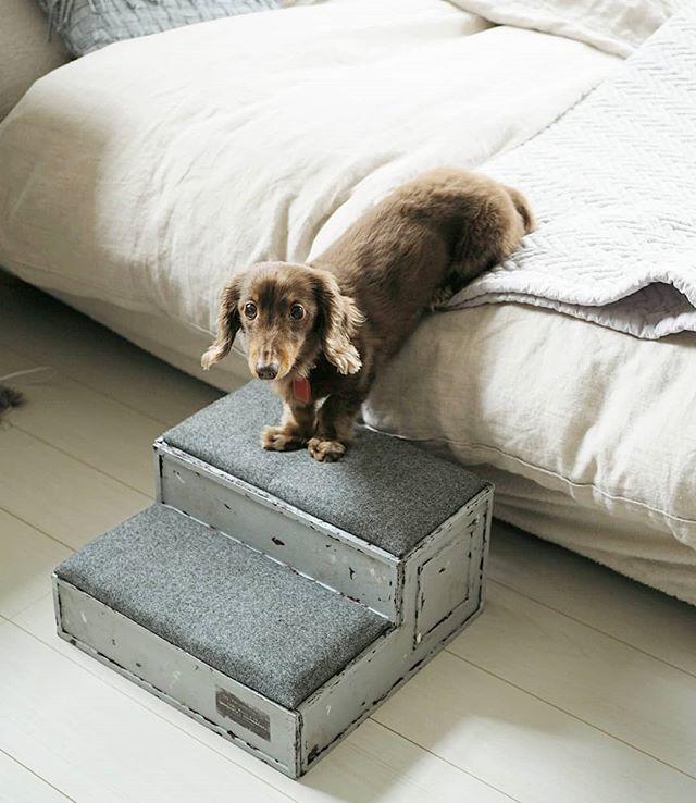 犬と暮らす部屋のレイアウト11