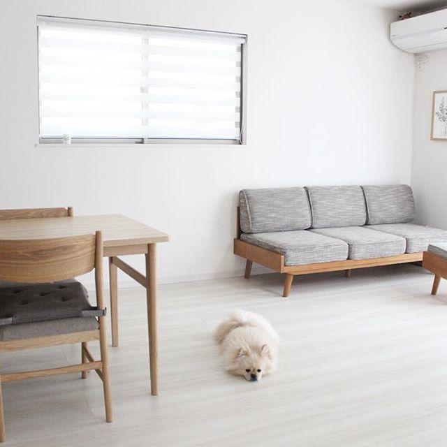 犬と暮らす部屋のレイアウト3