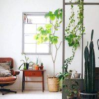 お部屋がパッと華やかに♡観葉植物が素敵なインテリア特集