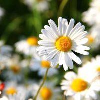初心者でも「育てやすいお花」って?プランターで簡単に始められるおすすめをご紹介